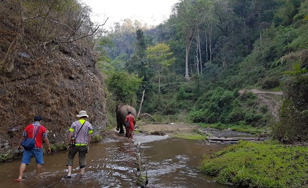 De'Kashor Elephant Home  Hilltribe Village ( Join )