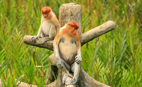 Tour Highlights for The Comfortable Naturalist Multi Day Sabah