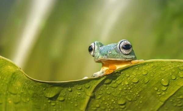 Tour Highlights for Sabah Ultimate Wildlife