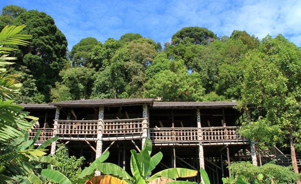 Tour Highlights for Best of Borneo