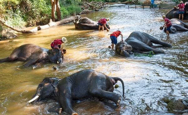 Anurak Community Lodge Beach & Rainforest Natural Safari