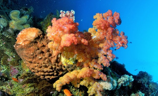 Diving in the Andaman