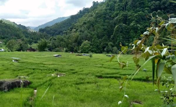 Dusun Trek And Homestay Soft Adventure