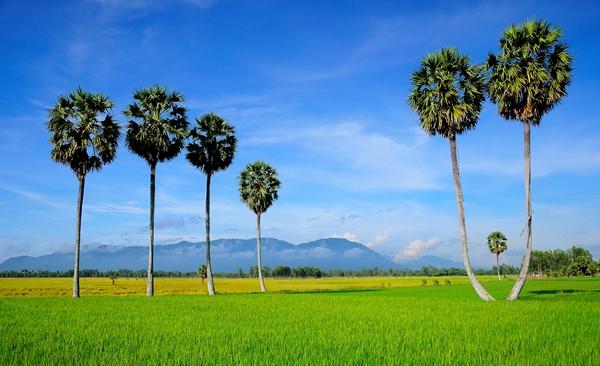 Rustic Countryside of Ninh Binh