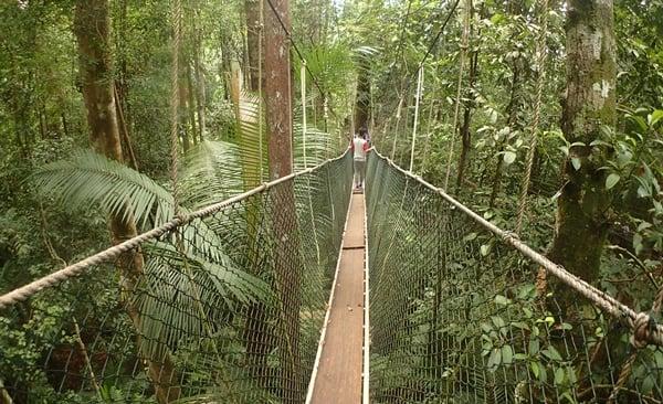 Taman Negara Rainforest Explorer