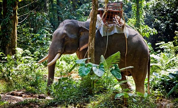 Overnight Tree House Safari (from Khao Lak)