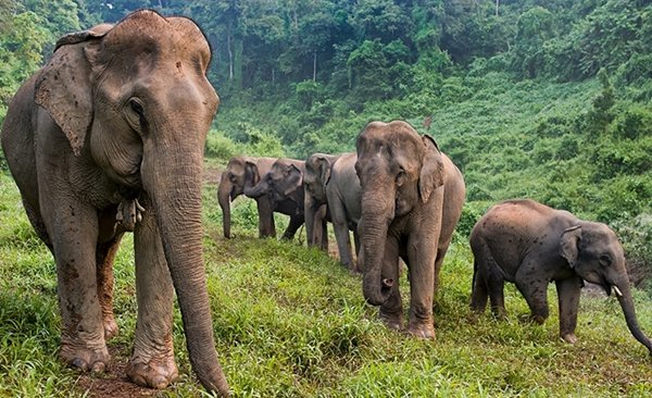 Elephant Conservation Discovery