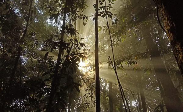 Sabah's Lost World Trek (Maliau Basin)