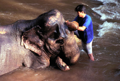 th-elephant-camp
