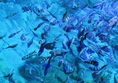 th-under-water-photo-of-fish