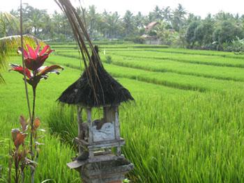 indo-bali-ubud-1