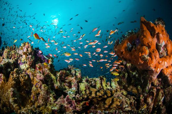 The colourful sea life of the Gili Islands