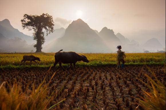 Farmer in Northeast Vietnam