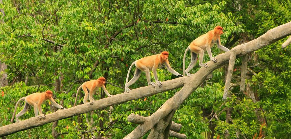 Family Wildlife and Jungle Stay Kuching (9 Days / 8 Nights)