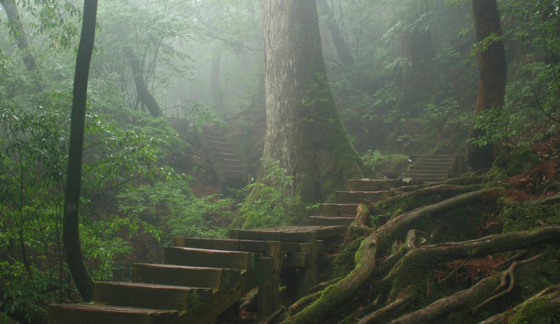 Misty forest of Yakushima
