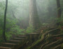 Misty forest of Yakushima