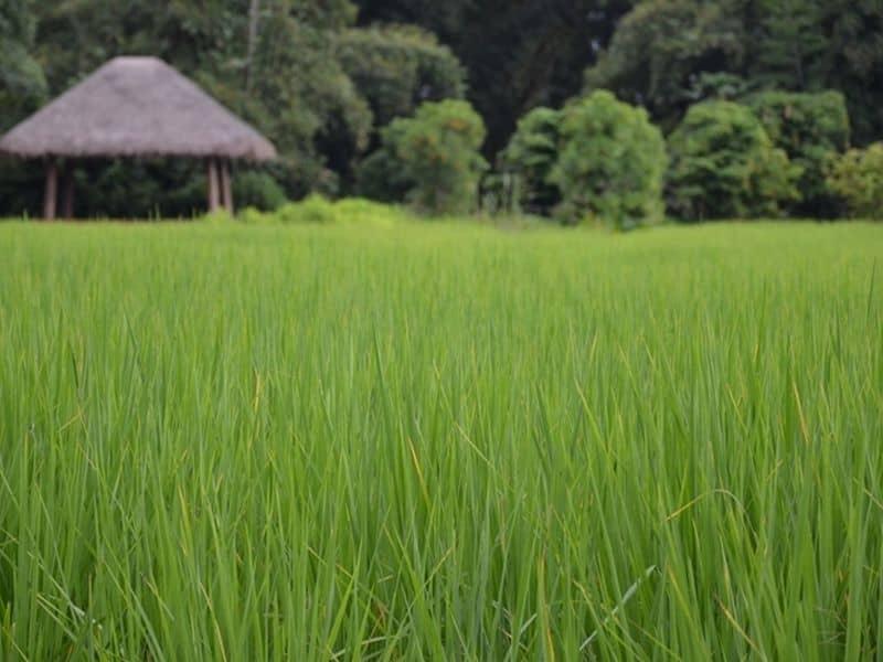 Photo of Taste of Rural Thai, thailand