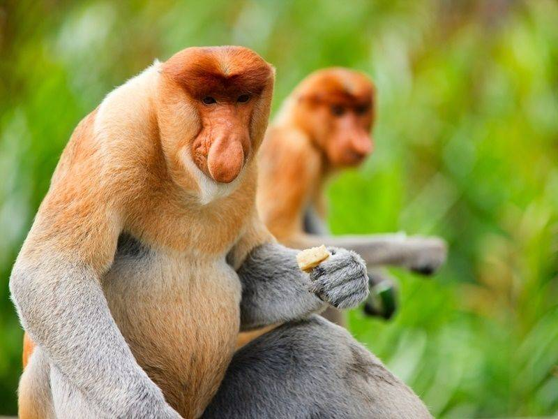 Photo of Sabah Ultimate Wildlife Malaysia