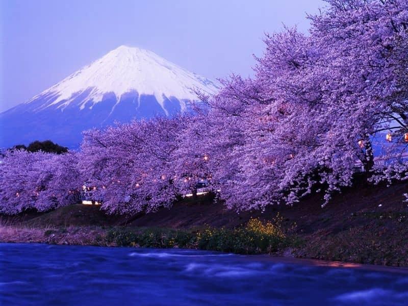 Indulge in Japan, Japan