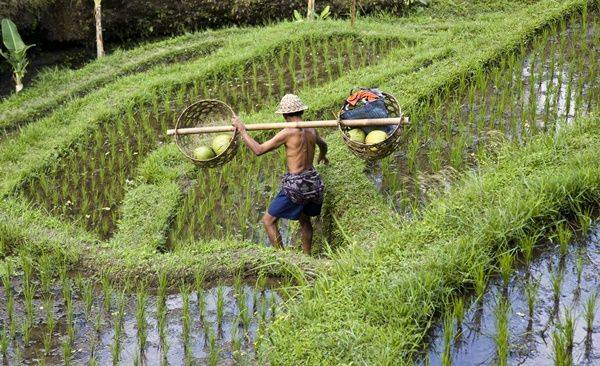 Tour Highlights for Bali Family Cultural Adventure