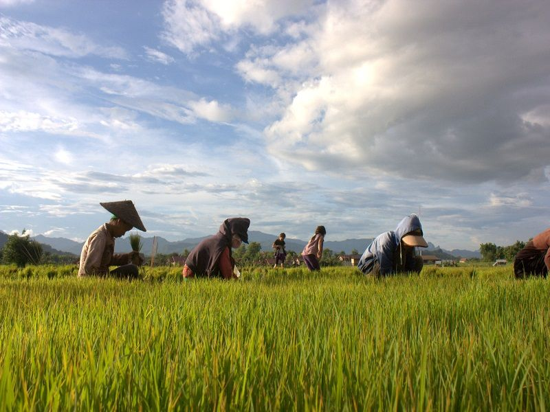 Photo of The Living Land, laos