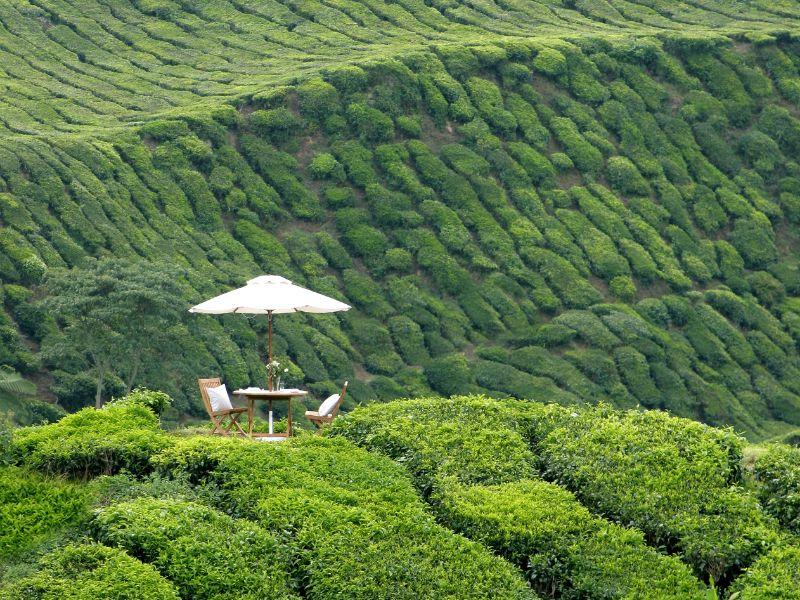 Photo of Private Picnic in Tea Plantation, malaysia