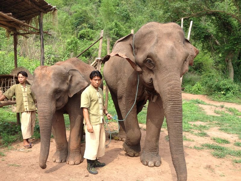 Photo of Visit to Green Hill Valley Elephant camp, myanmar