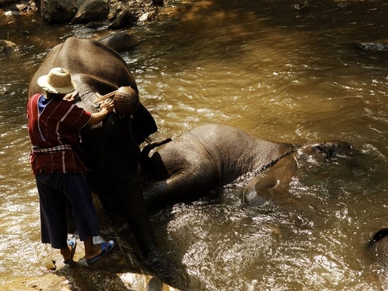 Photo of Live the Life of a Mahout, thailand
