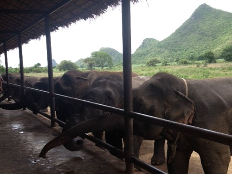 Photo of Spend a Day with the Elephants, thailand