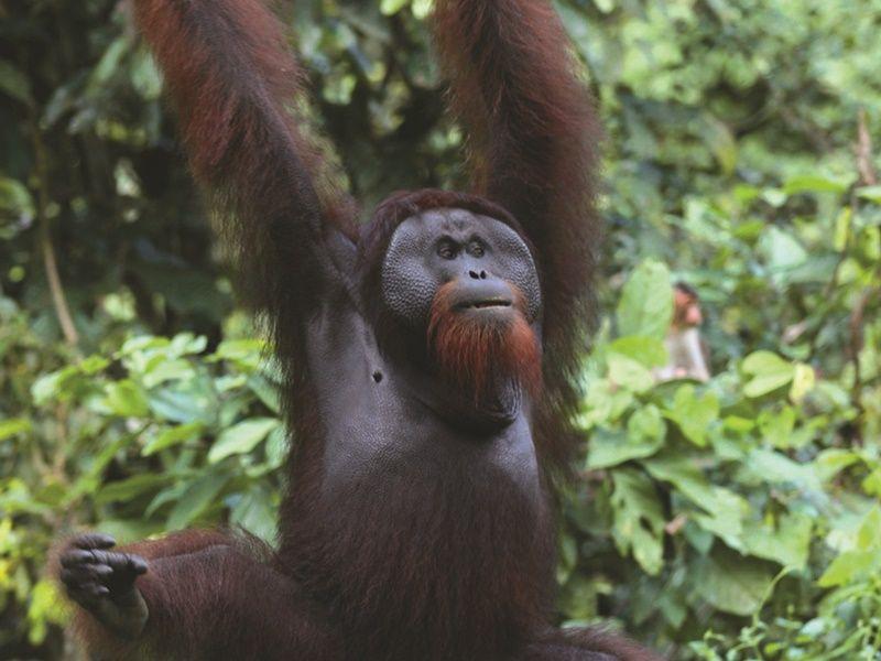 Sabah Wildlife Adventure