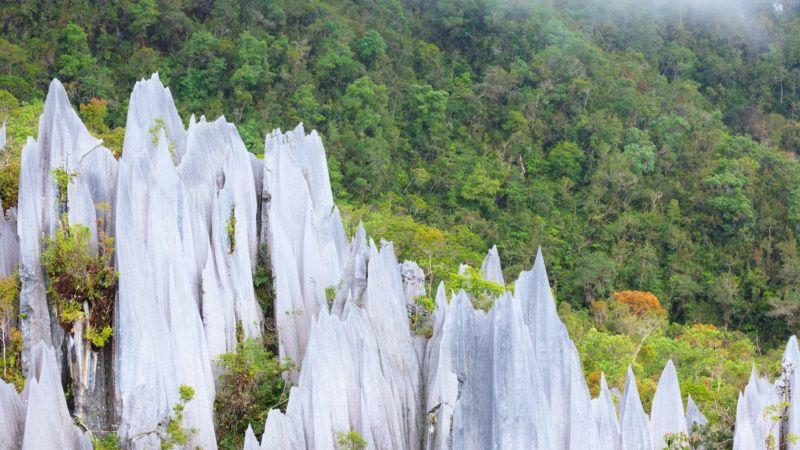 Photo of Best of Borneo, Malaysia