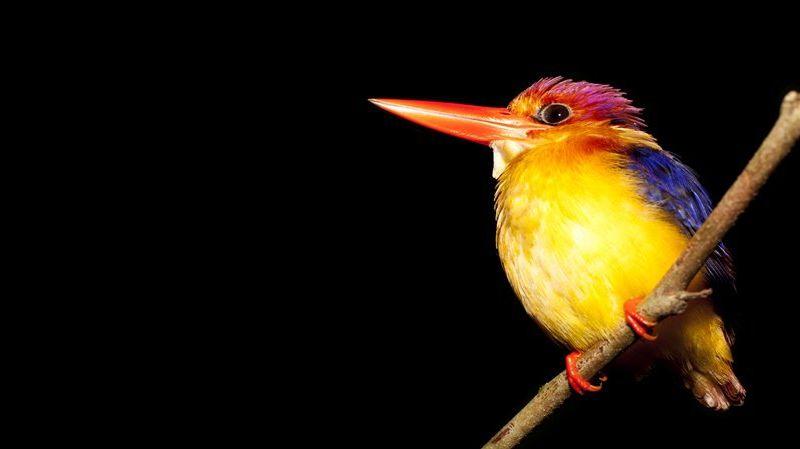 Photo of The Comfortable Naturalist - Sabah, Malaysia