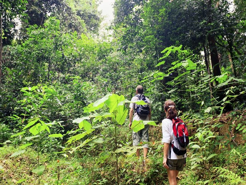 Photo of Trekking the NEPL Cloud Forest Challenge,Laos